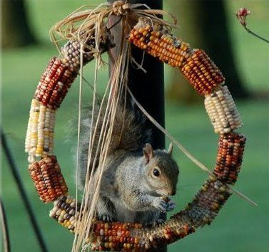 Indian Corn Crafts & Decor. @selizabethdrake we should grow Indian Corn so we have endless amounts to feed the squirrels