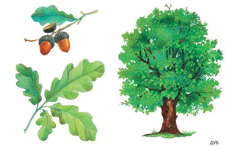 Расскажите детям о деревьях