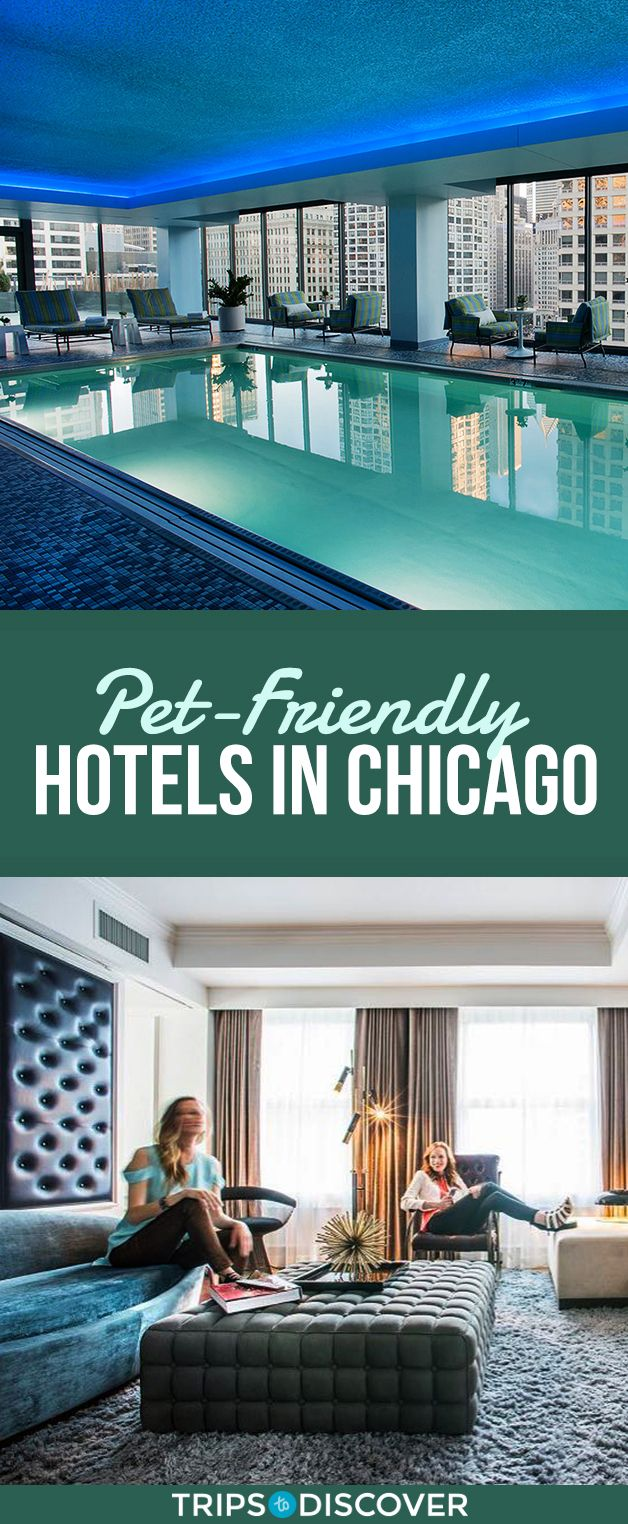 11 Pet Friendly Hotels In Chicago To Bring Your Dog Along In 2020 Pet Friendly Hotels Cool Places To Visit Hotel