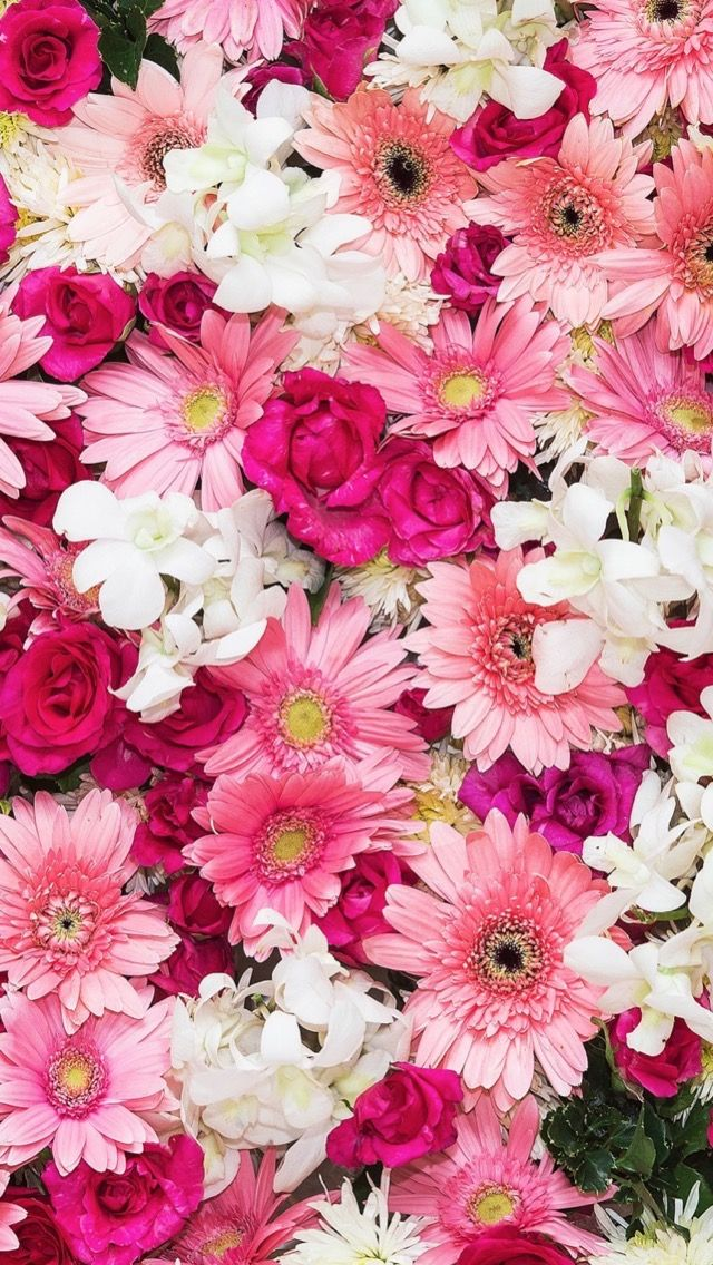 Flower Wallpaper Pink For Android Natures Wallpapers Pinterest