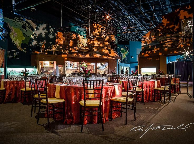 37 best unique wedding venues in cleveland ohio images on pinterest photo of the cleveland museum of natural history junglespirit Choice Image