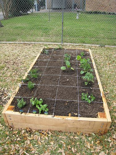 Vegetable garden raised beds and gardens on pinterest for Veggie patch design