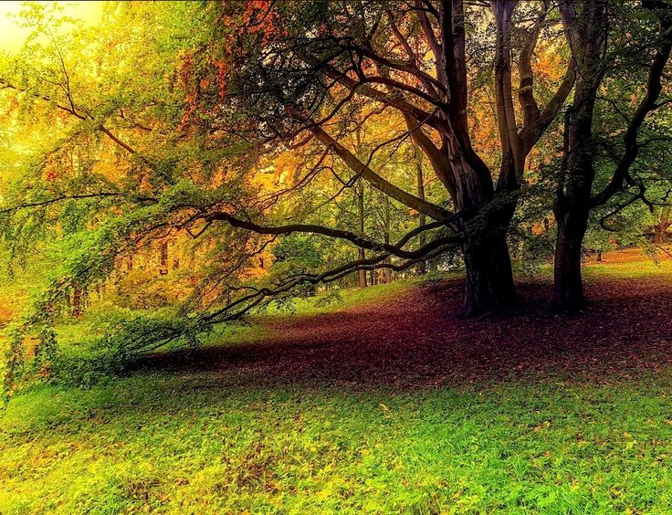 A tree in the Paradise! by Aziz Nasuti on 500px