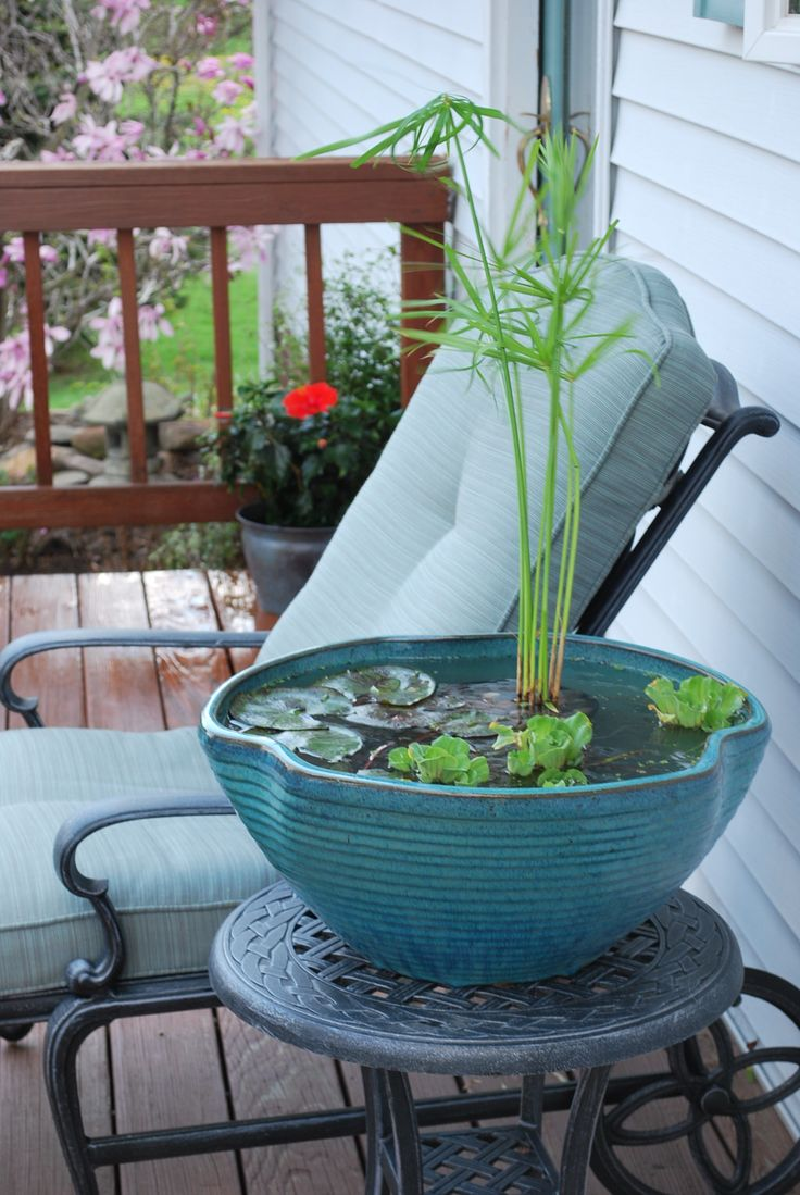 Small container water garden for a balcony. Add a goldfish to gobble up any…