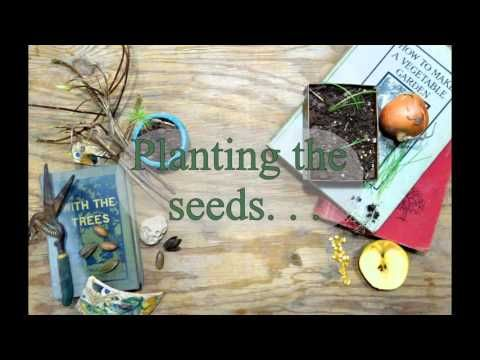 how to grow your own seeds