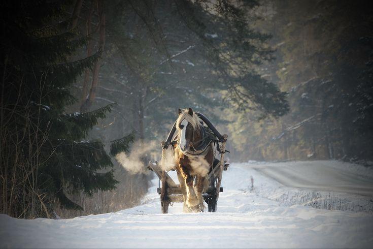Winter on Podlasie