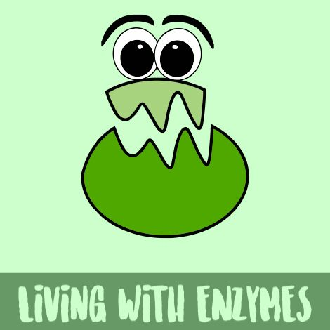 Have you ever wondered what enzymes do for you.  Read our article and find out.
