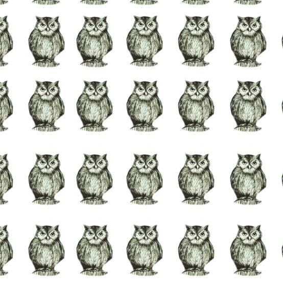 A3 Wise Owl Boxxcard Design