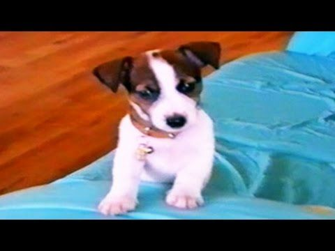 Prime amusing Animal Films | Humorous Animals Compilation | Funny cat video clips | funny dog movies