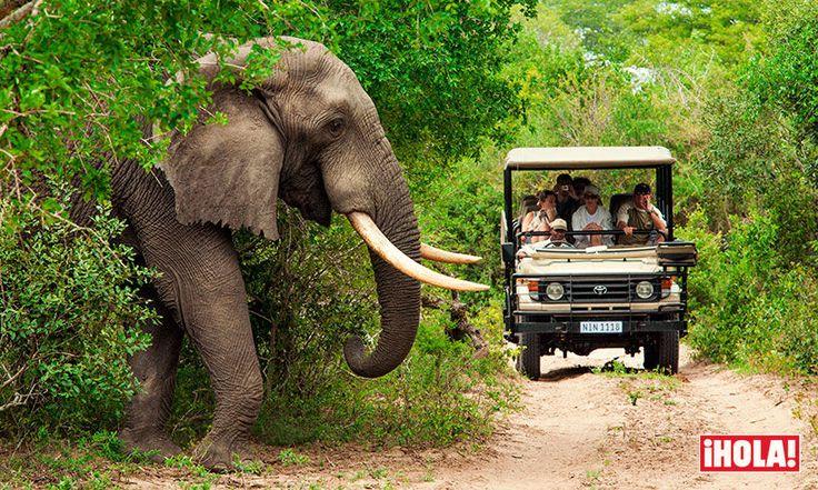 Te contamos cómo y dónde disfrutar de un safari en Sudáfrica #viajes #africa #animales #elefantes #safaris #travel