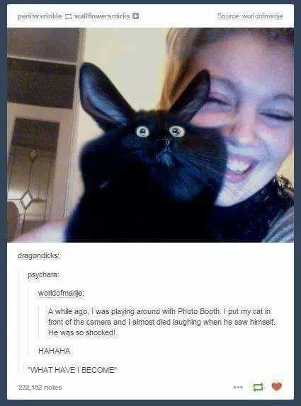 Diese Katze, die eine Existenzkrise hat: