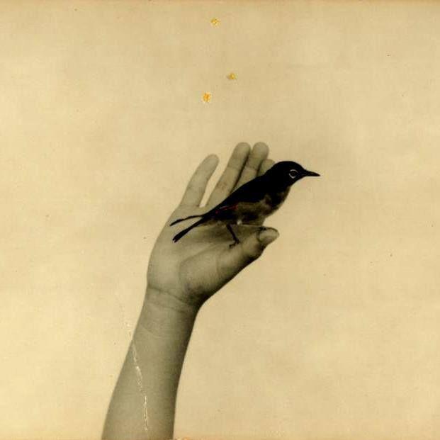 Bird by pablo neruda