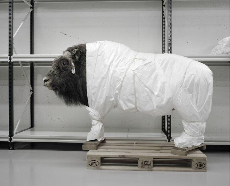 A moveable beast - Helge Skodvin