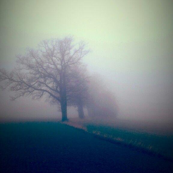 Eiketrær i tåke, Åsgårdstrand