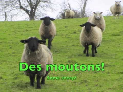 Animals in French: As-tu un animal?