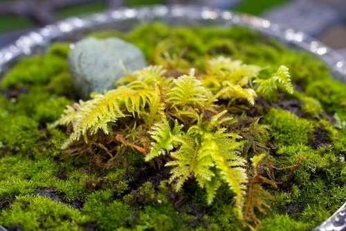 Moss garden on a plate.
