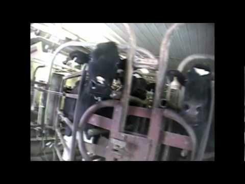 Descorne en bovinos, sinónimo de rentabilidad y