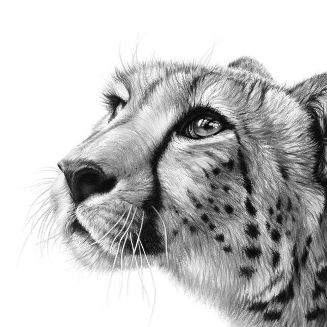 Best Art About Cats Images On Pinterest Beautiful Cats - Stunning drawings of endangered wild animals by richard symonds