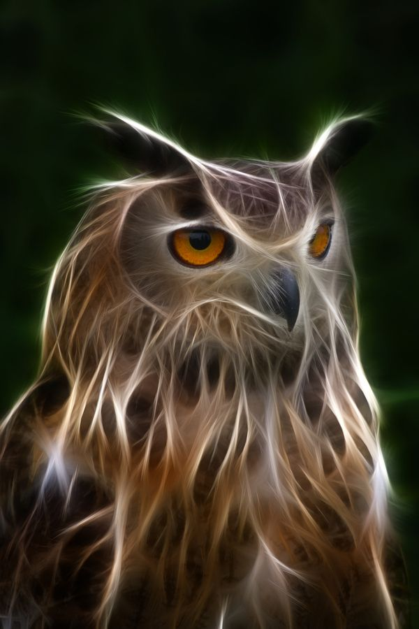 Electric Owl , love this picture