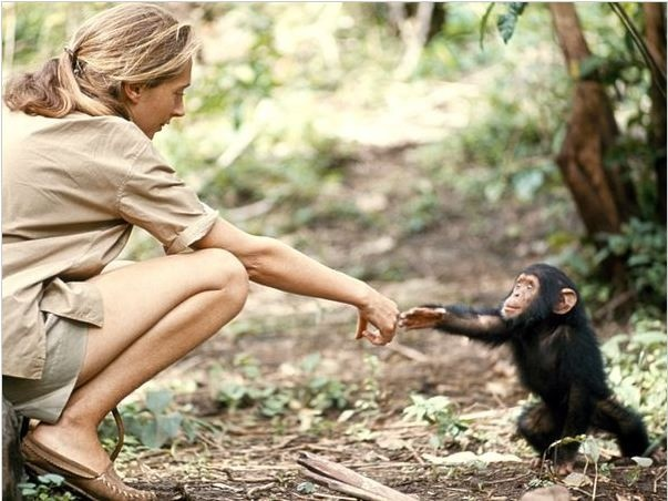 Dr. Jane Goodall with baby chimpanzee.