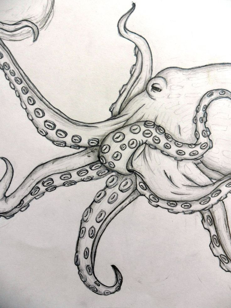 Best 25 Octopus sketch ideas that you will like on Pinterest