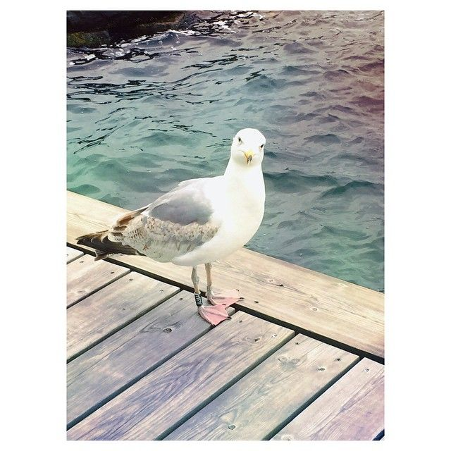 Another good reason to #smile. The #seagull is really listening to me. #hello #gull #Oslo #Norway #ocean #sea #bird #MigrationMadeEasy #BeHappy #LifeIsBeautiful #挪威 #奧斯陸 #海鷗 #微笑 #海洋 #旅行 ❤️