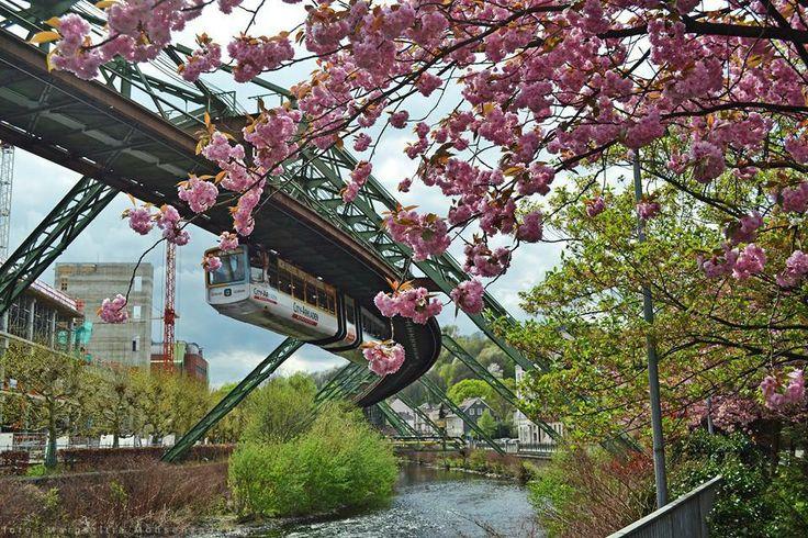 Kirschblütenromantik & unsere Schwebebahn - Wuppertal, Germany.