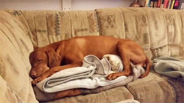 Dogs That Broke The Human Rules System – 22 Pics