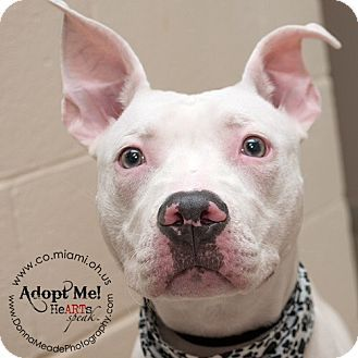 Meet Priscilla A Dog For Adoption