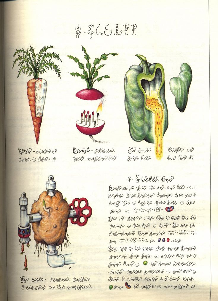 1000 images about the book codex seraphinianus on