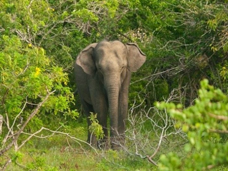 Animal Sanctuaries in Uttarakhand, India @ Sanctuariesindia.com