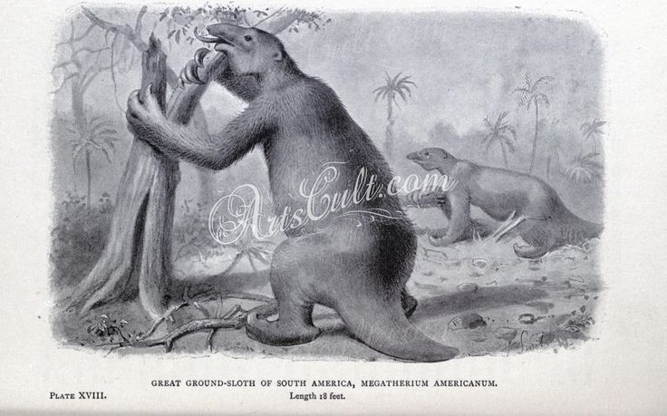 megatherium americanum, Great Ground-Sloth of South America      ...