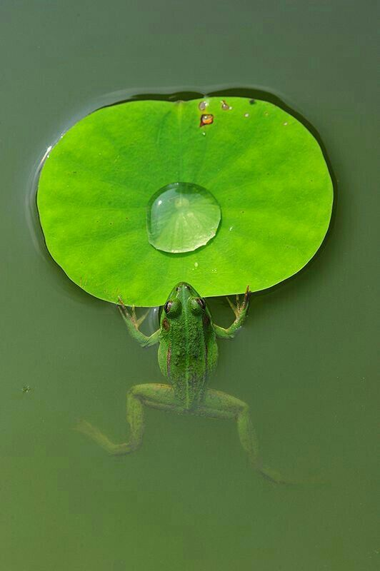 """""""Hey, Bubble! This is MY favorite lily pad. You have to get off and go somewhere else."""" ~ the Frog"""