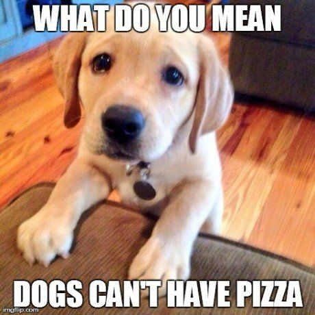 But pizza is the greatest food in the world