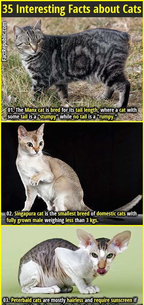 35 Interesting Facts about Cats Part 2 (With images