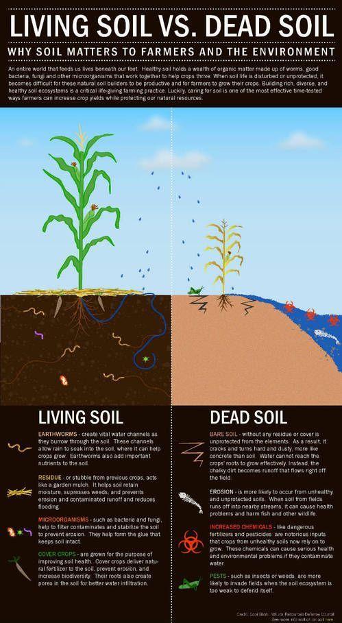 Living Soil vs. Dead Soil infographic | Gardening ...