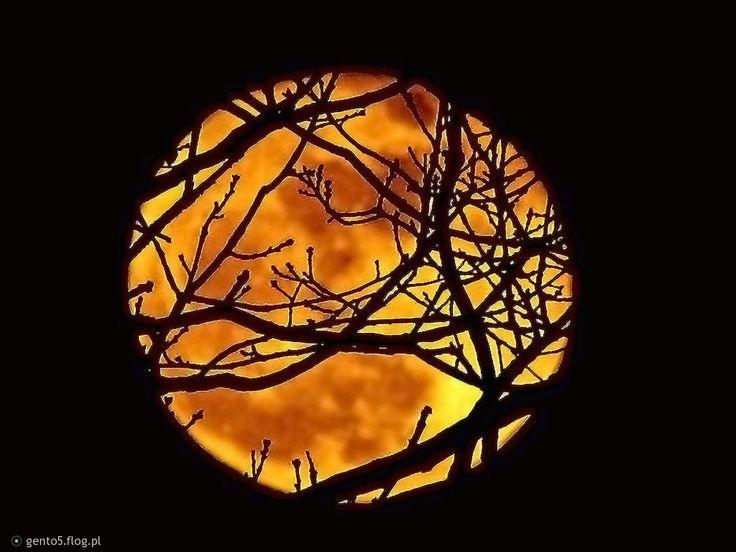 Zaplątany księżyc