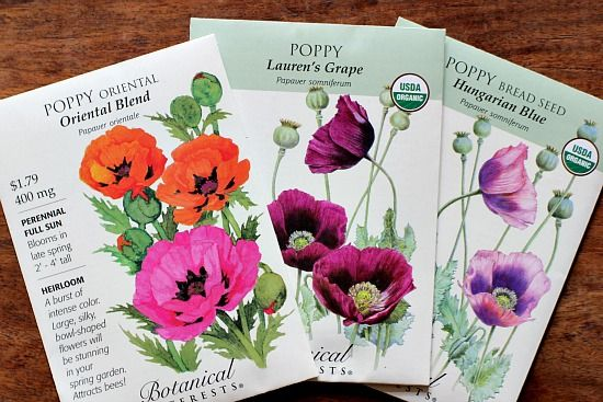 I don't know about you, but I love poppy flowers and I just can't get enough of them. This year I planted 3 varieties: Oriental Blend Lauren's Grape Hungarian Blue Brief description: Poppy flowers are absolutely gorgeous. They are very heat and...