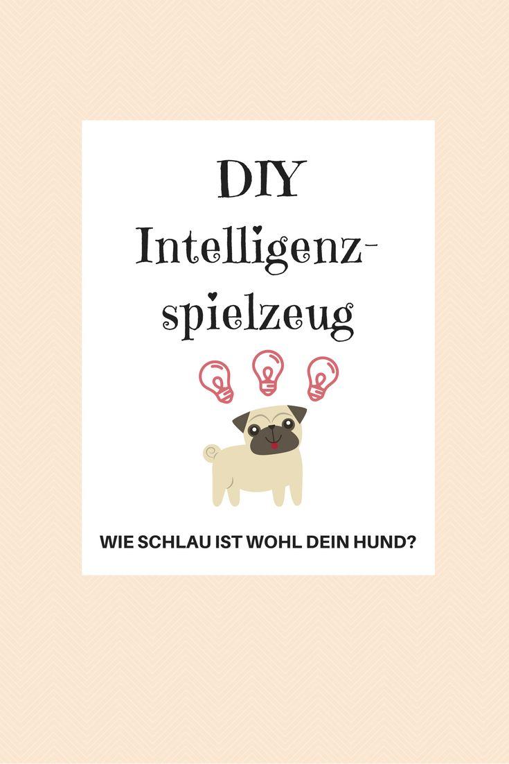 Anleitung für ein DIY Intelligenzspielzeug. Wie schlau ist wohl Dein Hund?