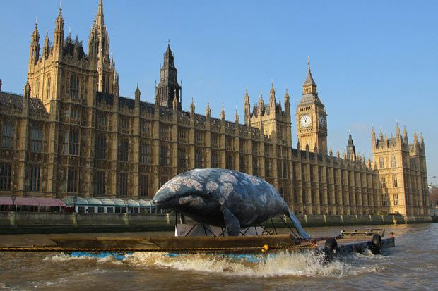 WWF highlights plight of western gray whale...A life size western gray whale replica floats past the Houses of Parliament in central London as WWF highlights the plight of the last remaining 130. PRESS ASSOCIATION Photo. Picture date: Tuesday February 7, 2012. The western gray whale is on the brink of extinction and their critical feeding ground of the coast of Sakhalin Island in the Russian Far East, is now under threat from further expansion of oil and gas projects. WWF is calling on the…
