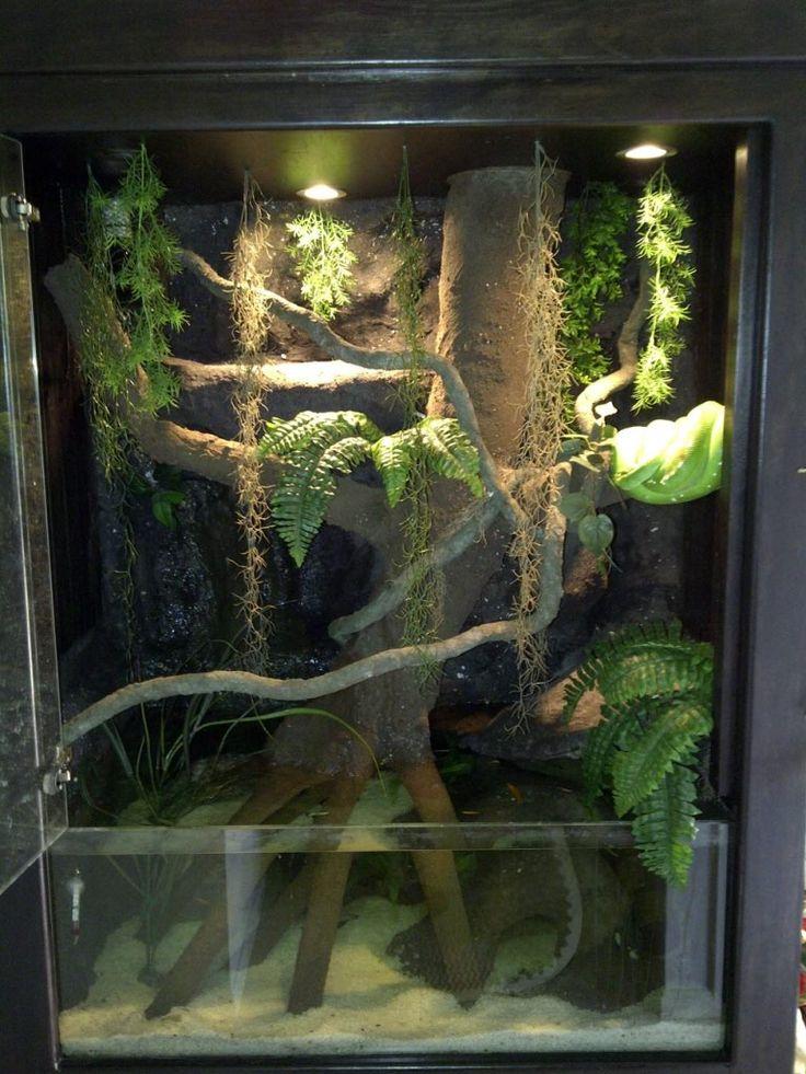Jungle Carpet Python Enclosure Vidalondon