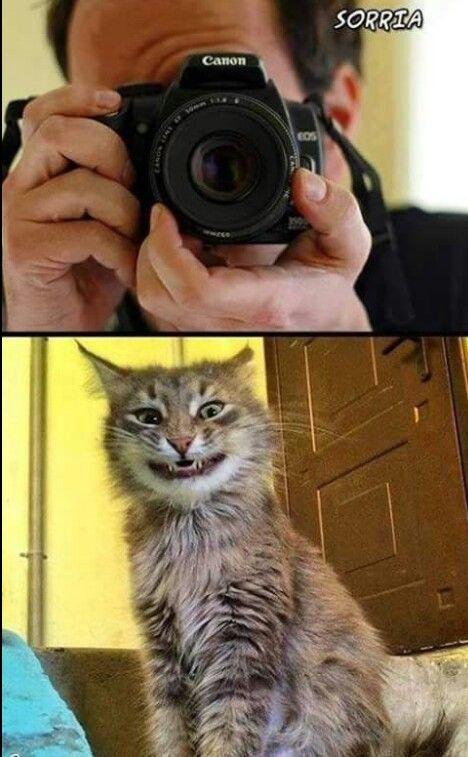 Foto do gato sorrindo