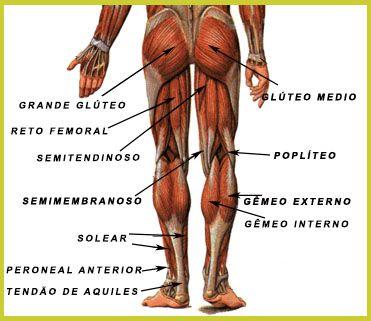 Anatomia dos músculos da perna (posterior)