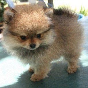 He looks like a little Ewok but so cute!  Name: City