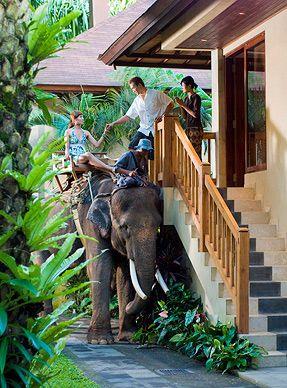 elephant safari park hotel lodge, bali. baby elephants roam the property, no big deal. <3