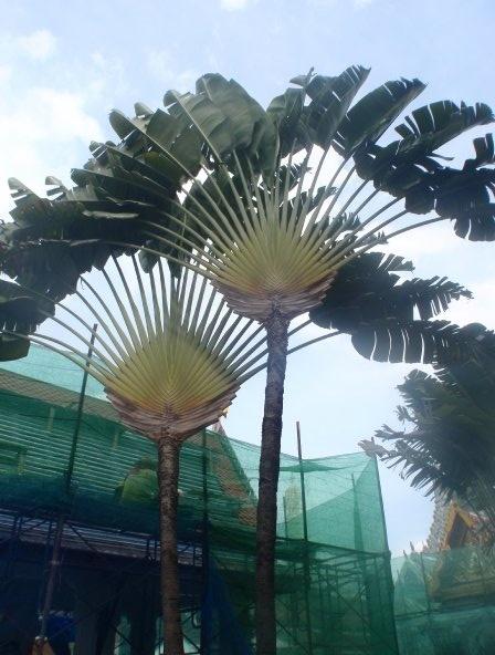 Crazy lookin trees in Bangkok!