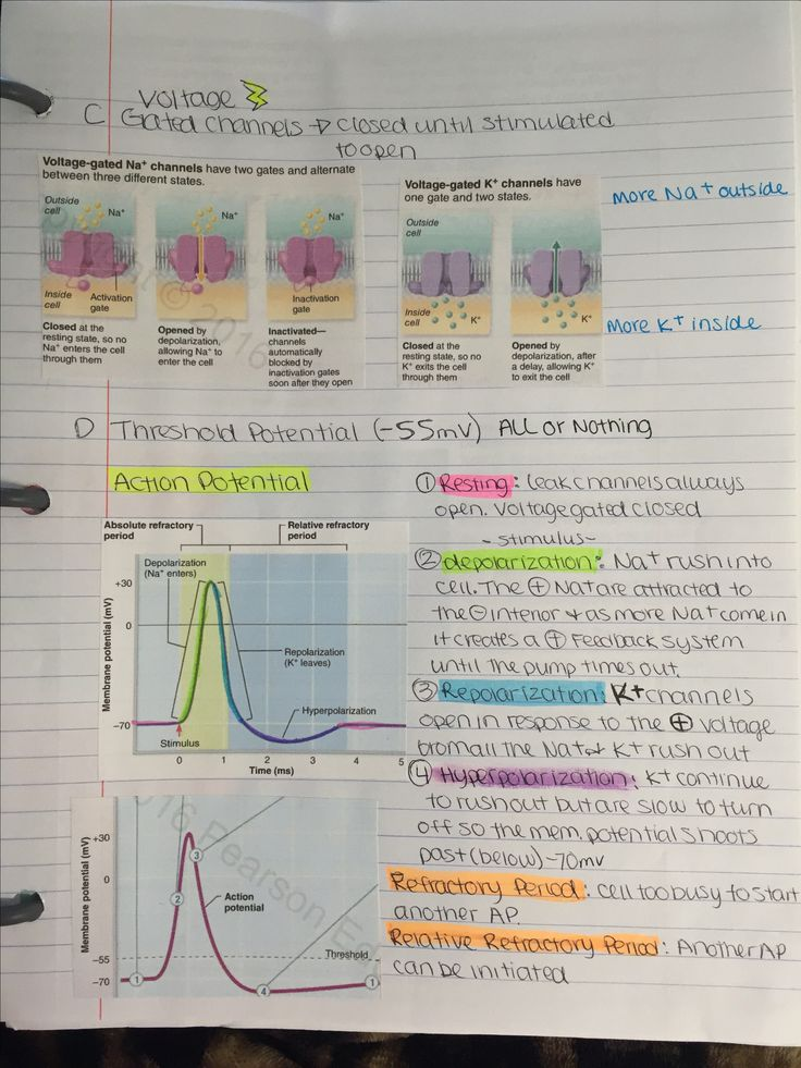 Anatomy Physiology Shs 310 Exam 1 At Arizona State: Best 25+ Physiology Ideas On Pinterest