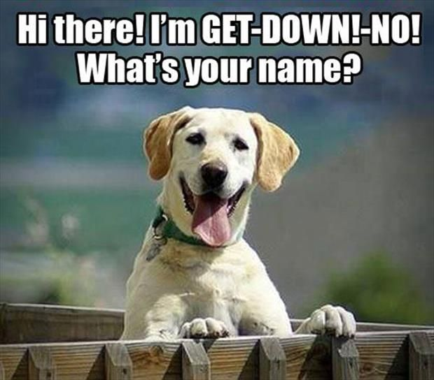 Dump A Day Funny Animal Pictures - 25 Pics