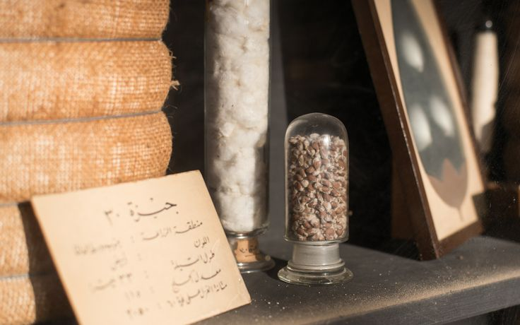 The Cotton Museum of Cairo - The Botany of Cotton