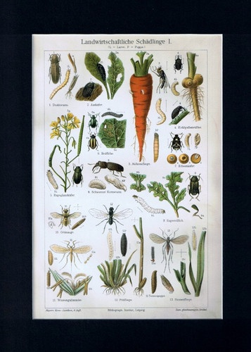 Antique Print Agricultural Parasites Germany Meyers 1905 $14.99